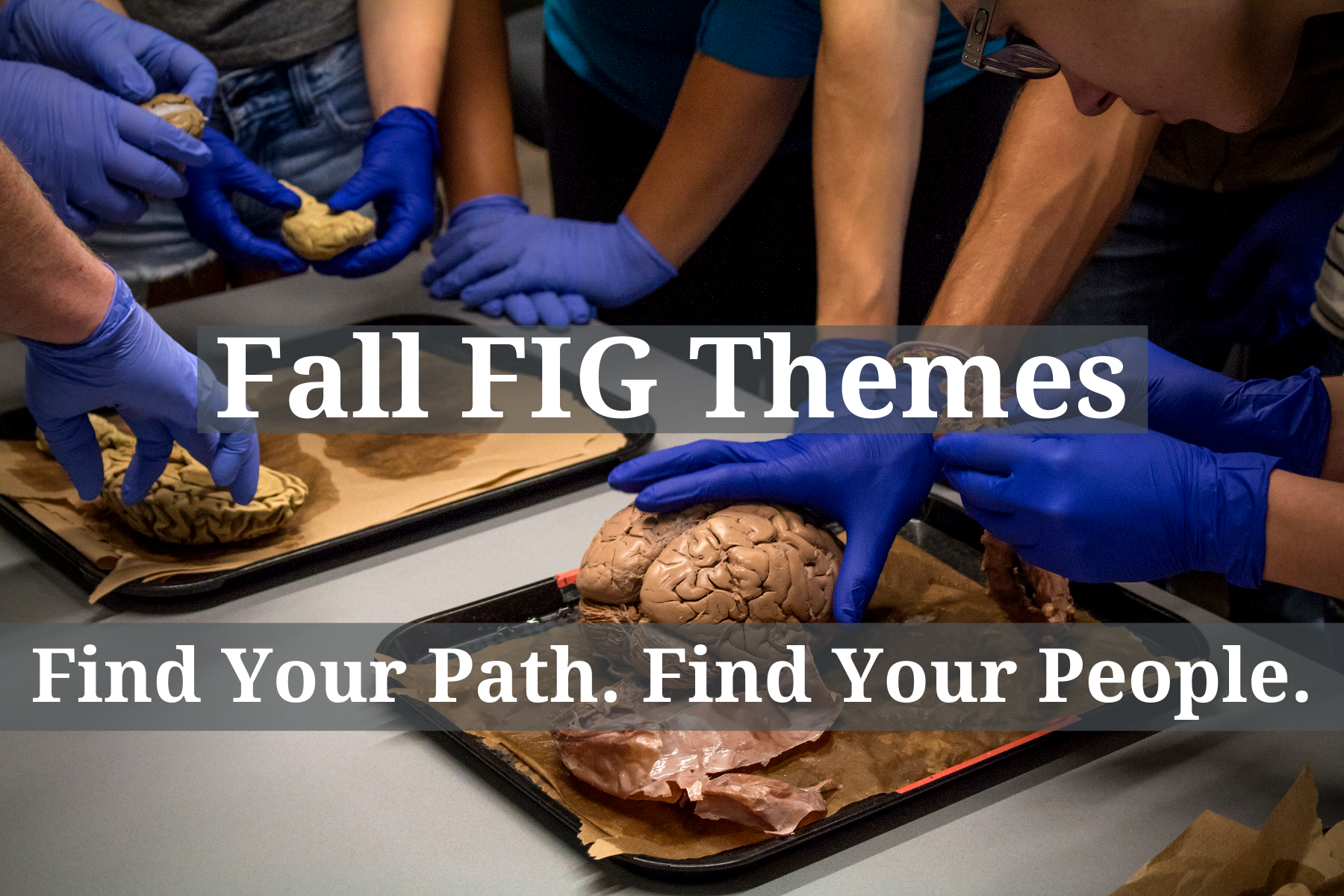 Fall FIG Themes: Find Your Path. Find Your People.